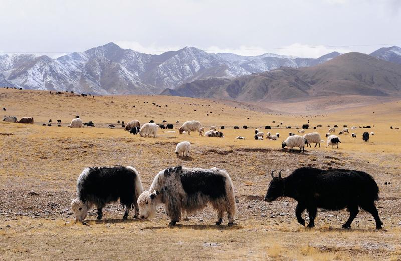 中国チベット高原の永久凍土、面積が16%減
