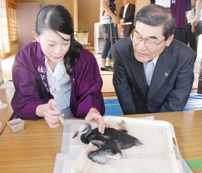 日本初、飼育下のウミウひながすくすく成長