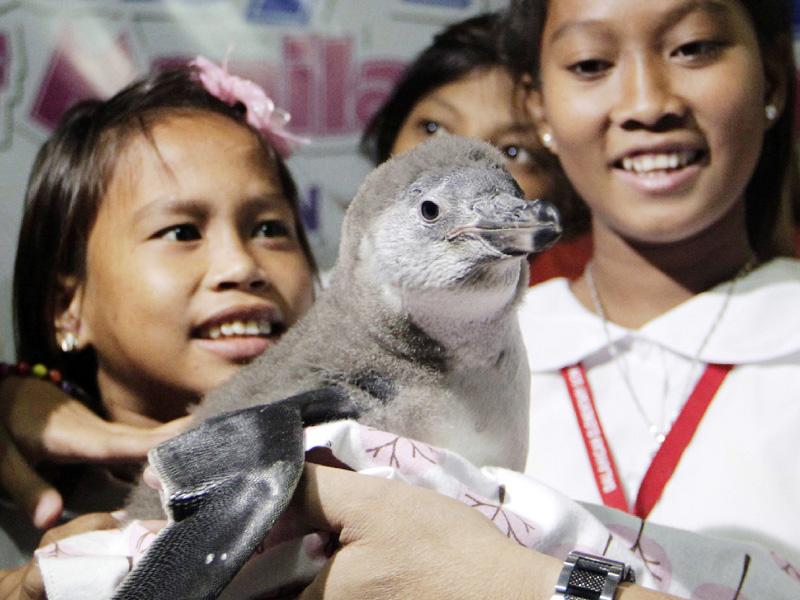 フンボルトペンギンの赤ちゃんに子供が歓声