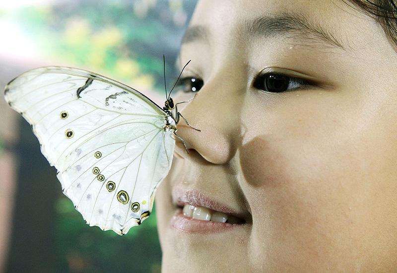 チョウと仲良し、キルギスの首都ビシケクで