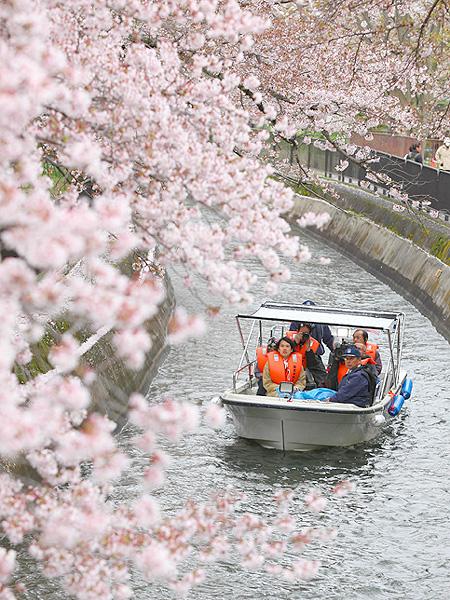 「琵琶湖疏水」で桜をめぐるクルーズ
