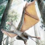 ムササビみたいな羽毛恐竜、飛膜広げて飛ぶ
