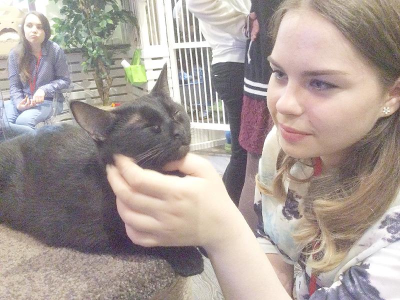モスクワで「猫カフェ」1号店がオープン