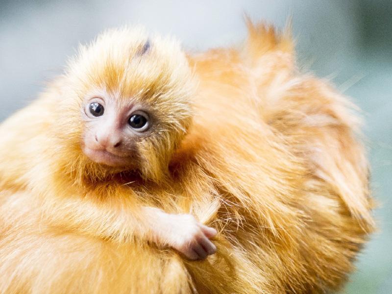 仏の動物園で絶滅危惧のサル17匹が盗まれる