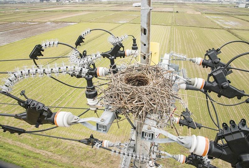 山形県で電柱上に作られたカラスの巣を撤去