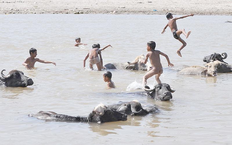 40度を超す酷暑、水牛と戯れる子供たち
