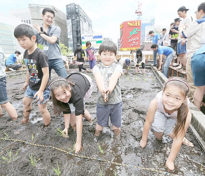 東京・銀座のビル屋上で小学生が酒米の田植え