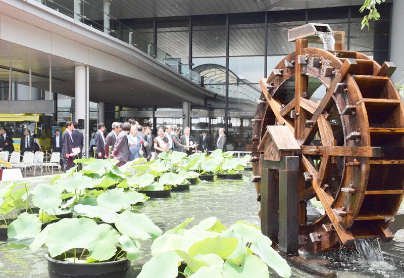 成田空港に「大賀ハス」の池が完成