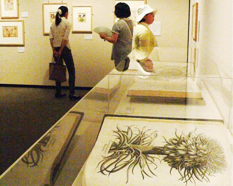 秋田市立千秋美術館、植物画中心に150点展示