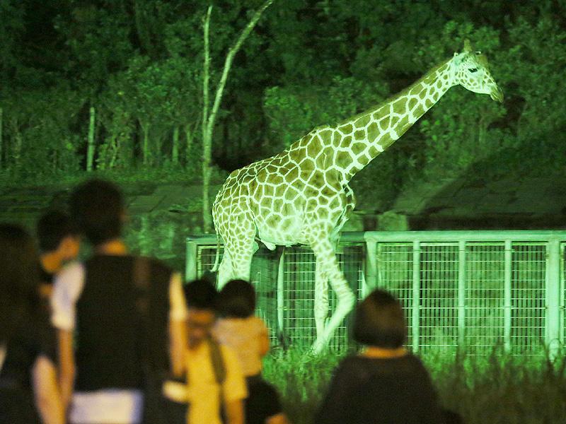 幻想的な夜の東山動植物園で動物観察