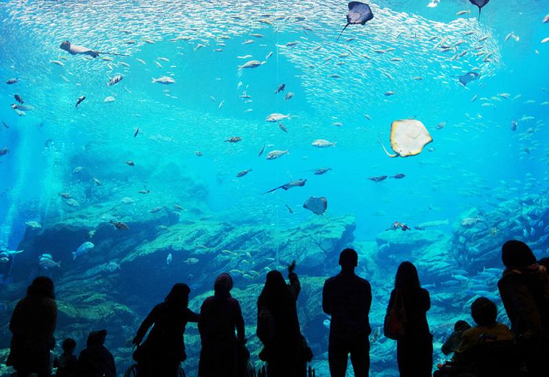 「仙台うみの杜水族館」で入館者100万人達成