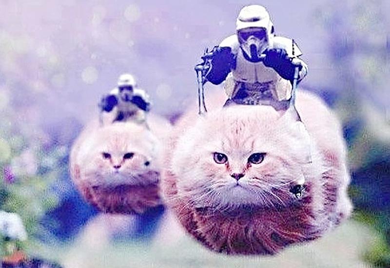 警戒中の警官の代わりに「猫」の画像を投稿