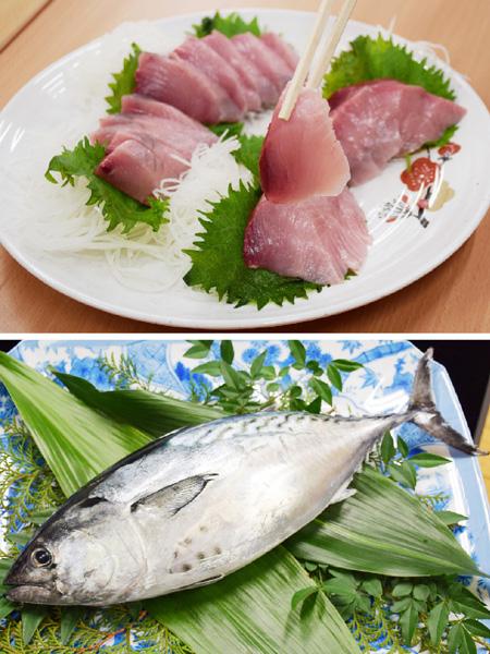 「全身トロ味」と太鼓判、高級魚のスマを出荷